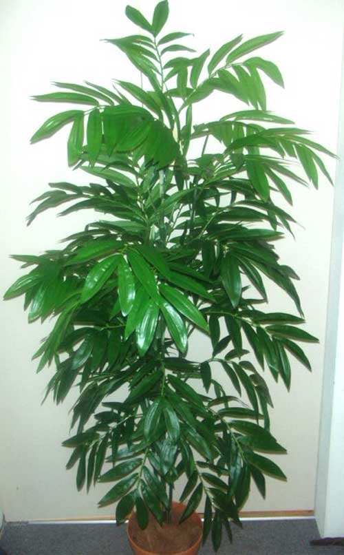 5-BAMBOO-PALM-X-600-SOFT-TOUCH-LVS