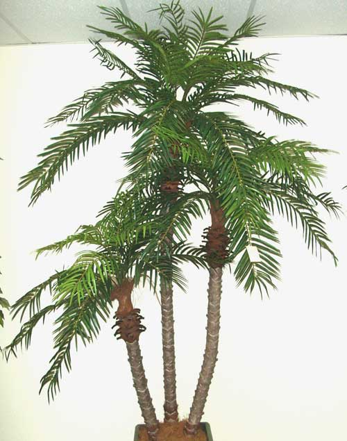 PHOENIX-PALM-SET-OF-3--5-7-8