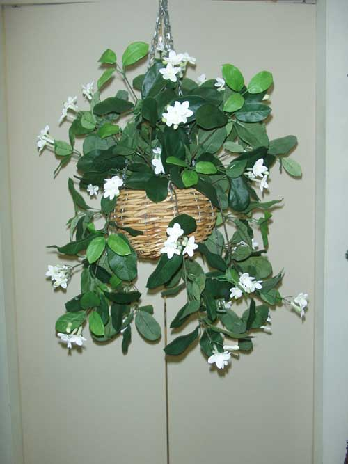 STEPHANOTIS-BUSH