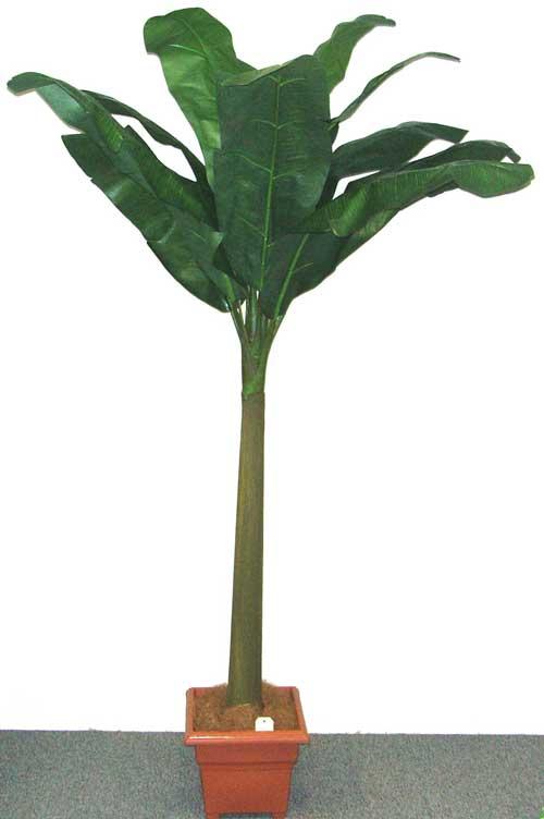 BANANA-TREE-X-12-LVS-240cm