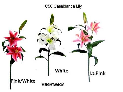 Casablanca_Lily