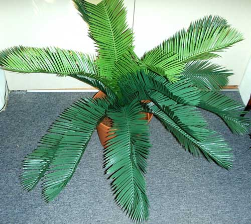 MEDIUM-CYCAD-X-18-LVSR